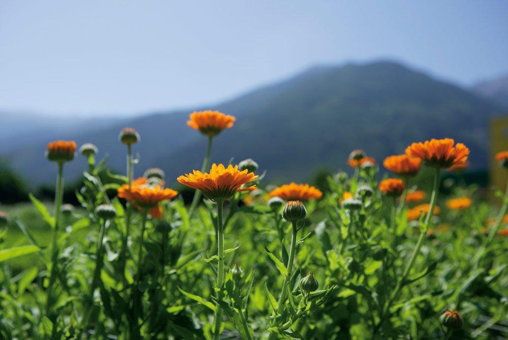 Altre cose che si possono scoprire nella primavera montana in Alto Adige