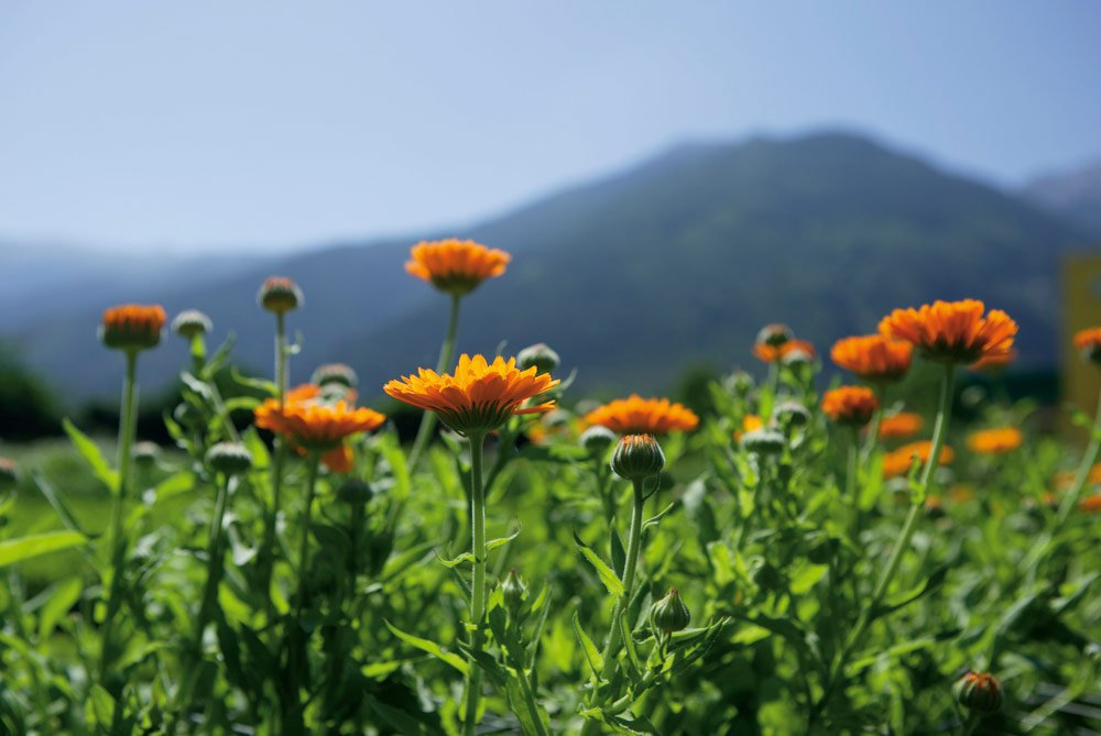Was man sonst noch im Südtiroler Bergfrühling entdecken kann